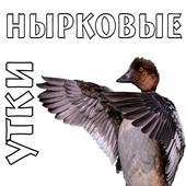 Манок на уток (нырковые) icon