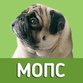 Мопс - выбор собаки icon