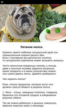 Мопс - выбор собаки screenshot 2