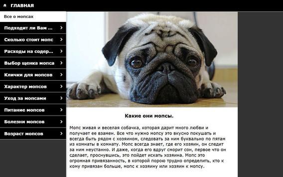 Мопс - выбор собаки screenshot 5