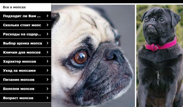 Мопс - выбор собаки screenshot 6