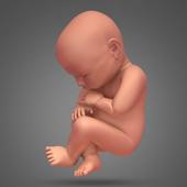 Pregnancy and childbirth. Pregnancy Calendar. bump icon