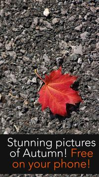Autumn Wallpapers apk screenshot