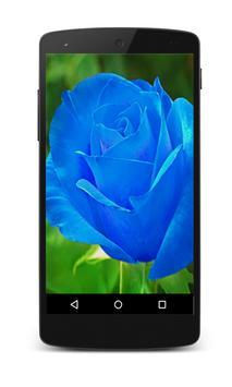 Rose Live Wallpaper screenshot 1