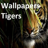 Wallpapers Tigers icon