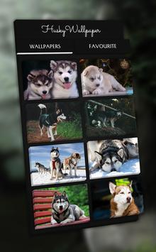 Husky Wallpaper - 4K, HD Wallpaper poster