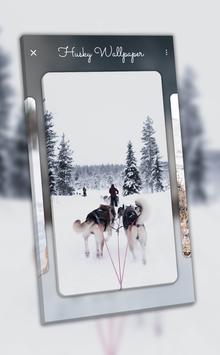 Husky Wallpaper - 4K, HD Wallpaper screenshot 7