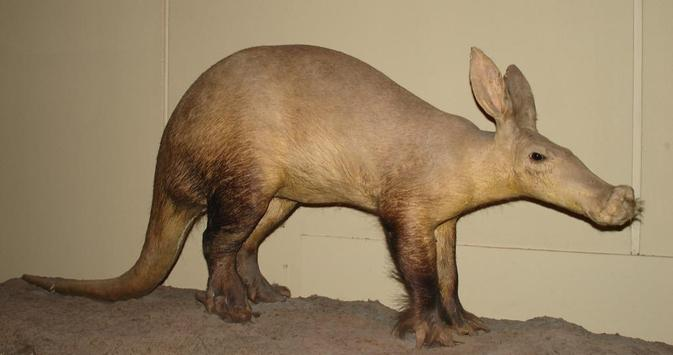 Cute Aardvarks Wallpapers apk screenshot