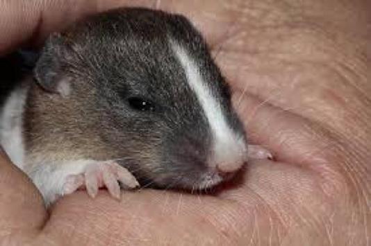 Cute Baby Mice Wallpapers screenshot 2