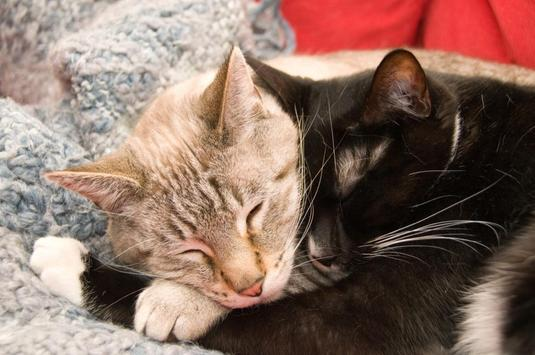 Snuggling Cats Wallpapers screenshot 1