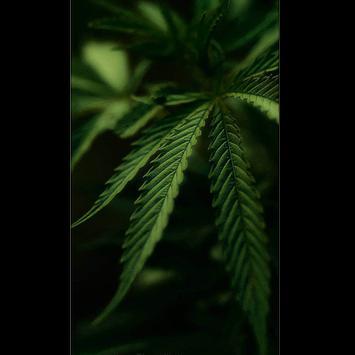 Weed Wallpaper screenshot 4