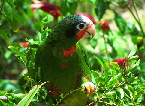 Amazon Parrots Wallpapers FREE screenshot 2