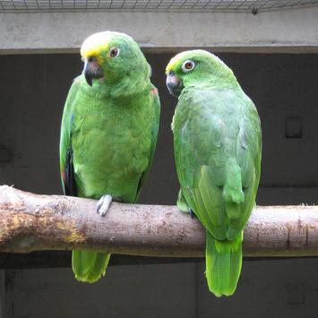 Amazon Parrots Wallpapers FREE screenshot 3