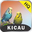 Master Kicau: Juara MP3 APK