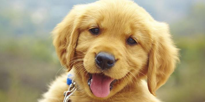 Cute Puppy Dog Wallpapers poster