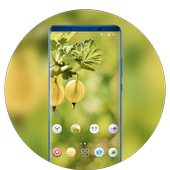 Theme for fall fresh fruit wallpaper icon