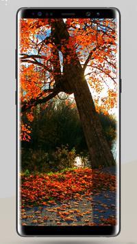 11000+ Nature Wallpapers 4K 2018 apk screenshot