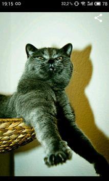 Funny Cats screenshot 1