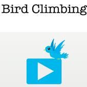 Bird Climbing icon