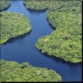 Amazon Rainforest wallpaper icon