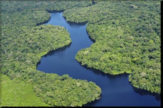 Amazon Rainforest wallpaper poster