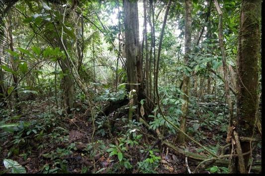Amazon Rainforest wallpaper apk screenshot