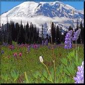 Mount Rainier wallpaper icon