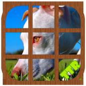 Pitbull Sliding Puzzle icon