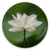 Heart Sutra icon