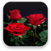 Rose Live Wallpaper icon