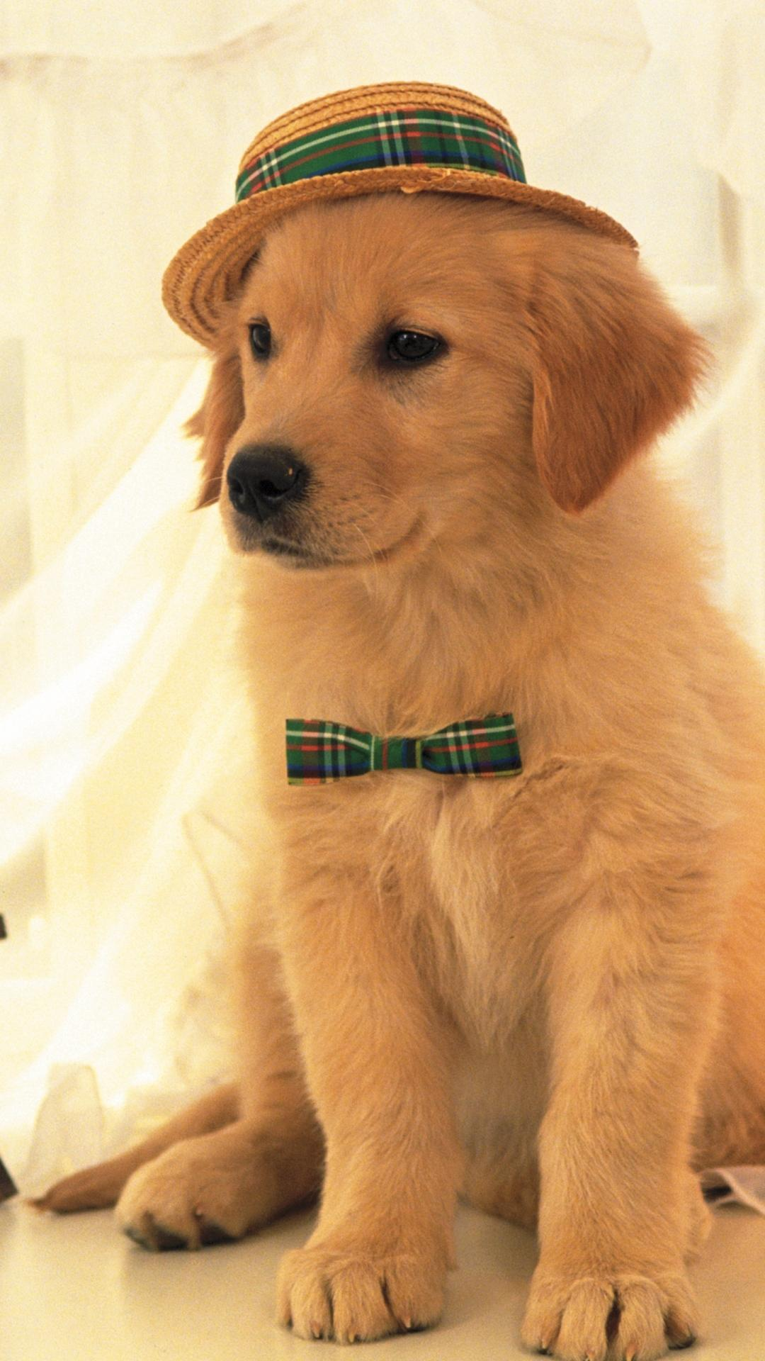 Cute Dogs Wallpapers Hd For Android Apk Download