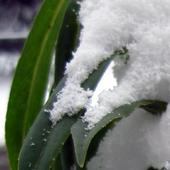 Settling Snow Live Wallpaper icon