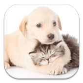 Cat and Dog Live Wallpapers icon