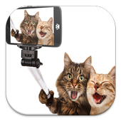 Funny Cat Live Wallpapers icon