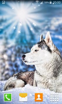 Husky Live Wallpapers poster