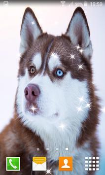 Husky Live Wallpapers apk screenshot