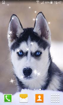 Husky Puppy Live Wallpapers apk screenshot