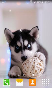 Husky Puppy Live Wallpapers poster