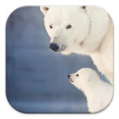 Polar Bear Live Wallpapers icon