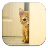 Stalker Cat Live Wallpapers icon