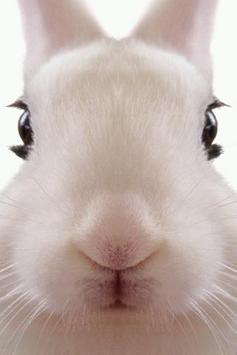 Rabbit LiveWallpaper poster