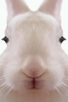 Rabbit LiveWallpaper apk screenshot