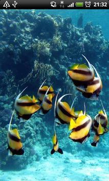 Angel Fish Live Wallpaper apk screenshot