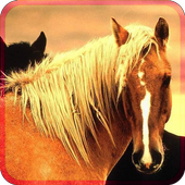 BEAUTIFULL HORSES icon