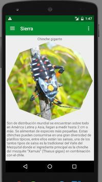 sierrita screenshot 1