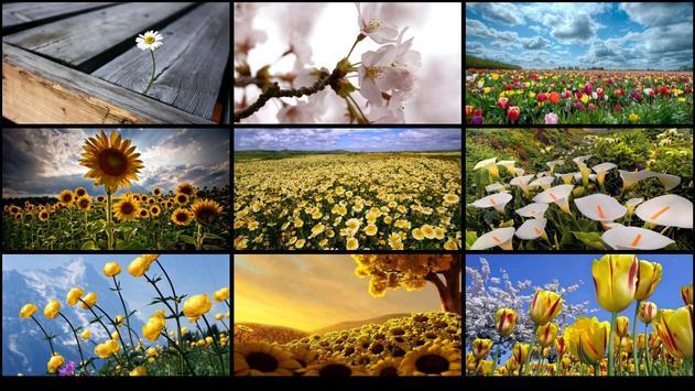 Fresh flower wallpaper screenshot 1