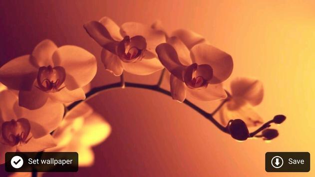 Fresh flower wallpaper screenshot 3