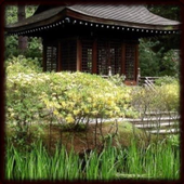 japanese gardens Wallpapers icon