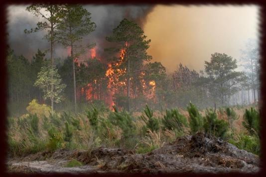 Wild Fires Wallpapers - Free apk screenshot