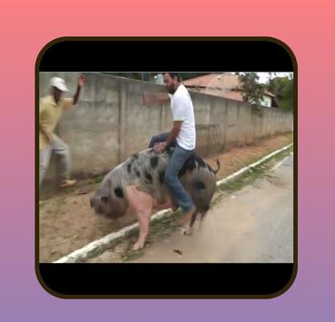 Funny videos. screenshot 7
